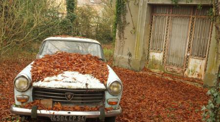 Voiture de collection « Peugeot 404 enfeuillée ! »